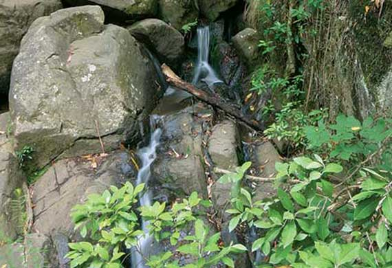 Walking Trails and Waterfalls